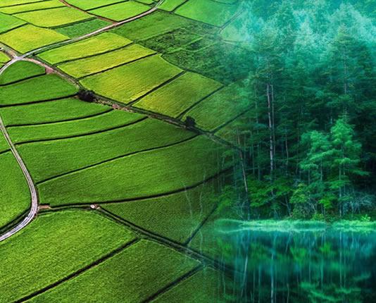农业与林业
